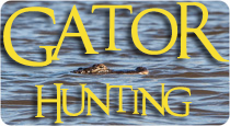 gator hunting in the delta