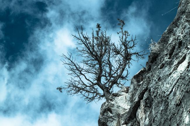 tree in walnut canyon