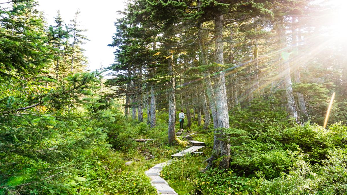 hiking whitter alaska