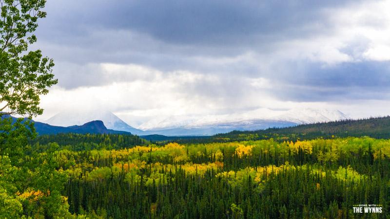 wild Denali National Park