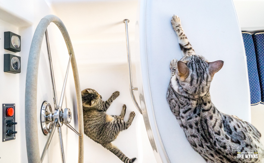 cats on a sailboat