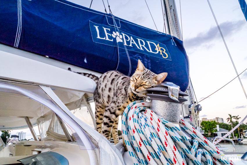 cats on a catamaran