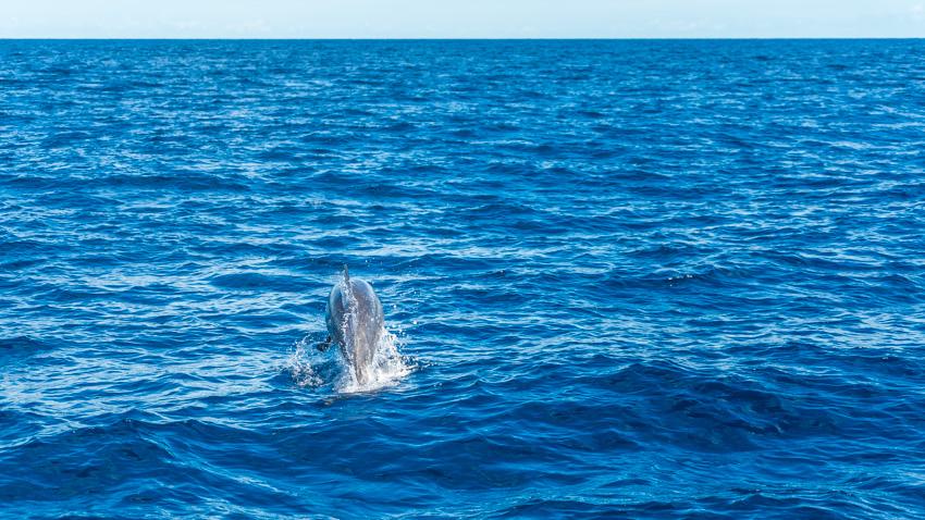 The dolphin escort