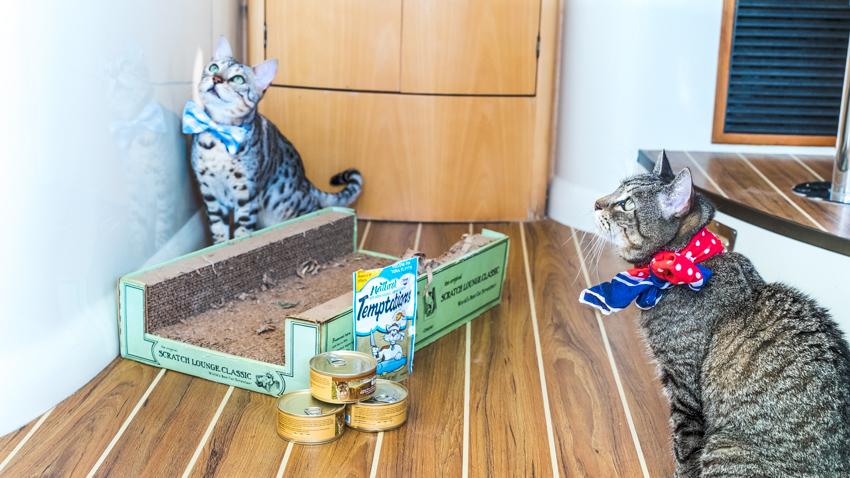 traveling sailing cats