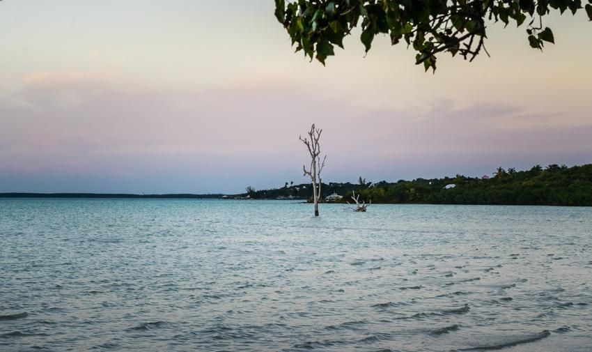 lone tree Bahamas