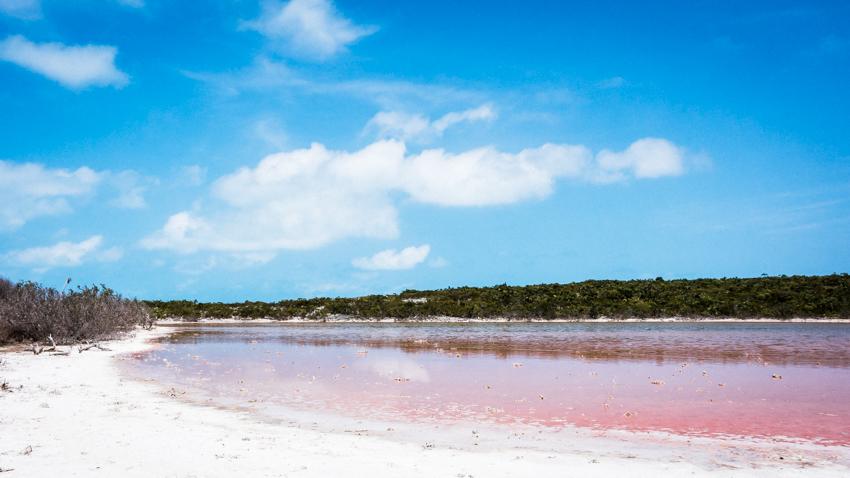 flamingo island pink salt pond