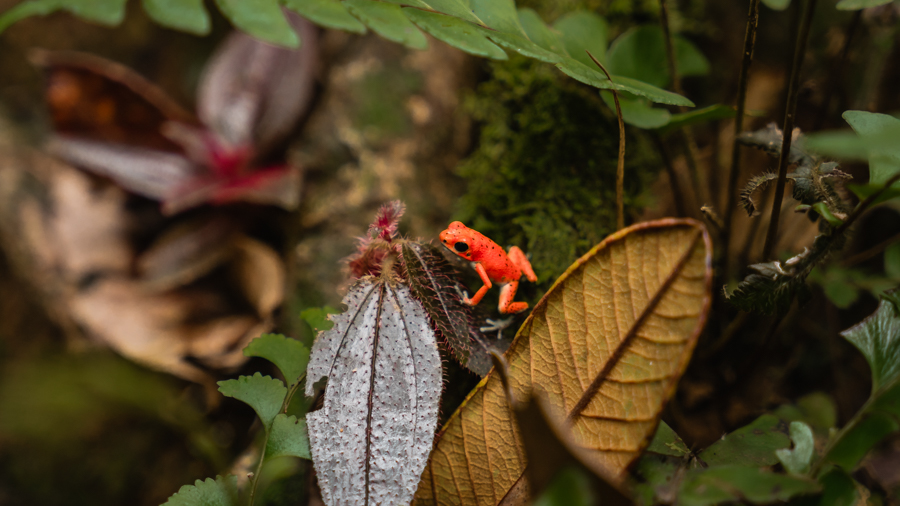 jungle hike with monkey sloth and red frog