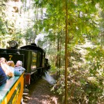 redwoods train