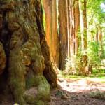 close tree
