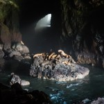 sea lion caves Florence oregon