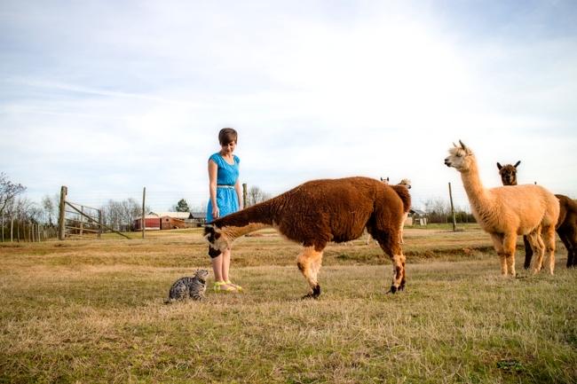 free farm stay