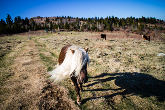 fabio the pony