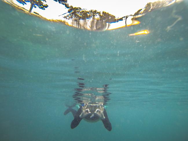 snorkel Florida