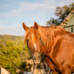 Baton Rouge Horse