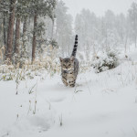 Walking the Cat in the snow