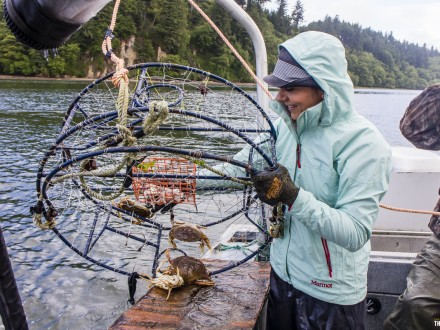 Dungeness crab in Oregon