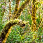 a mossy filled fern forest