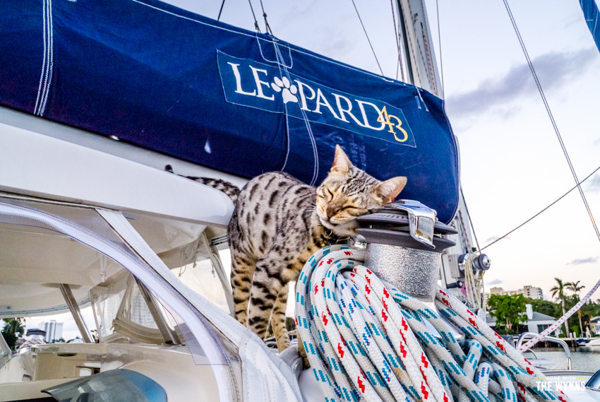 cats on a catamaran