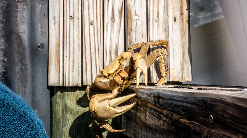 crabby dock neighbors
