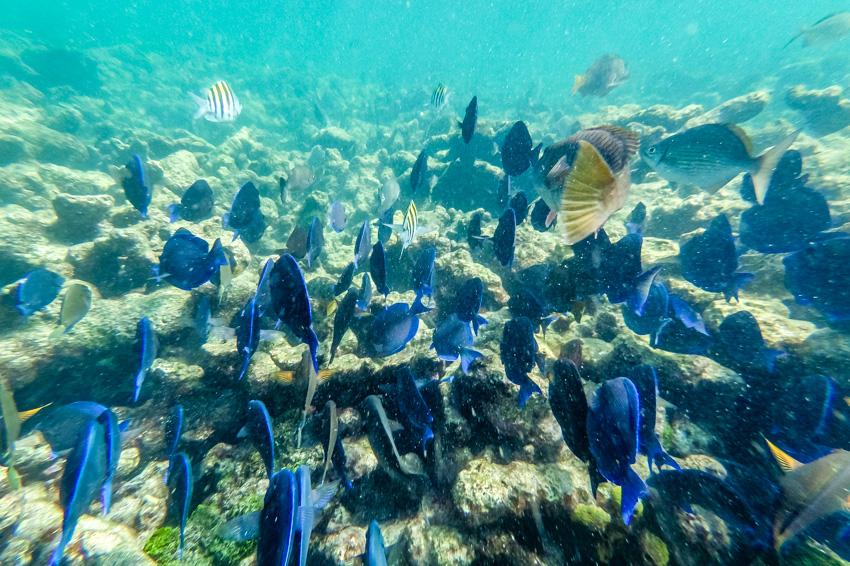 snorkeling dry rocks