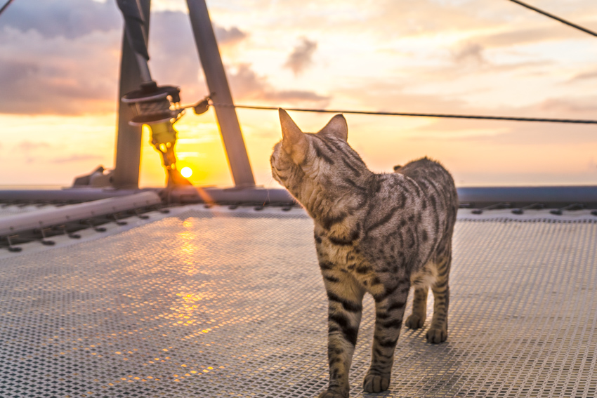 sunrise at anchor