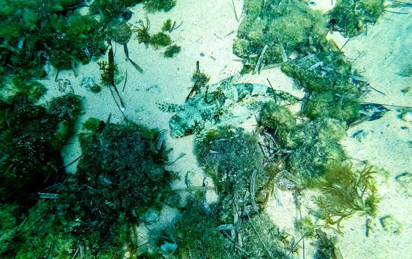 snorkeling wrecks at munjack cay bahamas