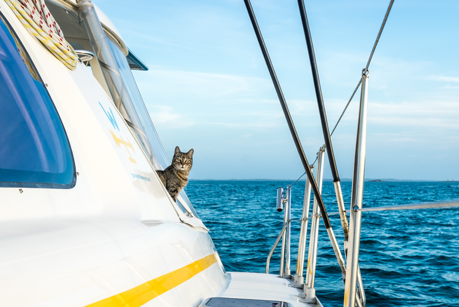 traveling cats