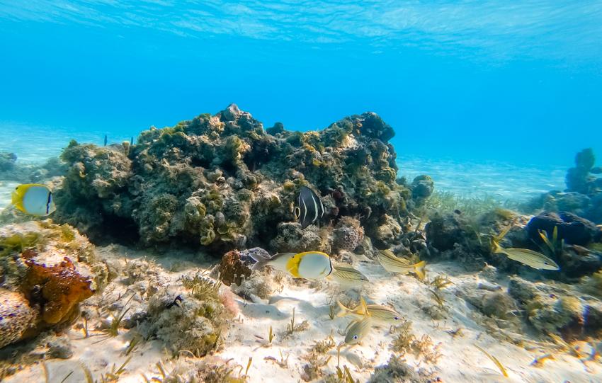 snorkeling exuma land and sea park