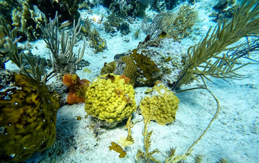 snorkeling Copperfield islands