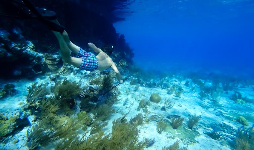 freediving spearing bahamas