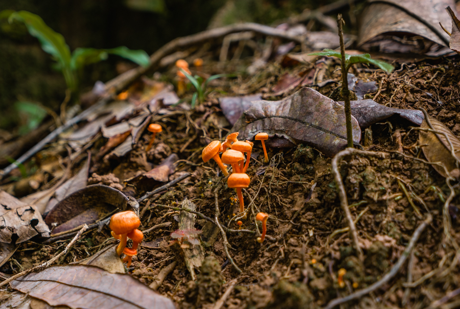 wild mushrooms in panama bocas del toro