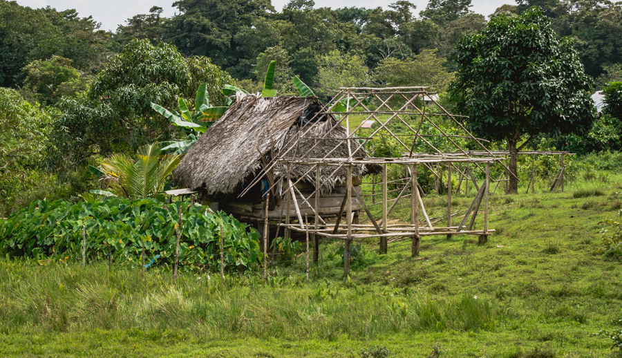 native ngobe village panama