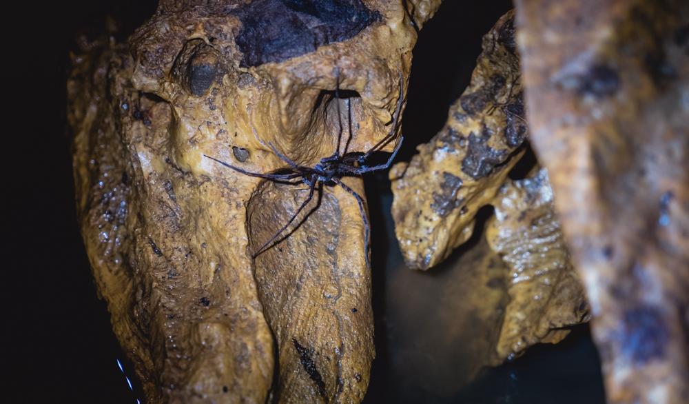 Isla Bastimentos Nivida Bat Cave