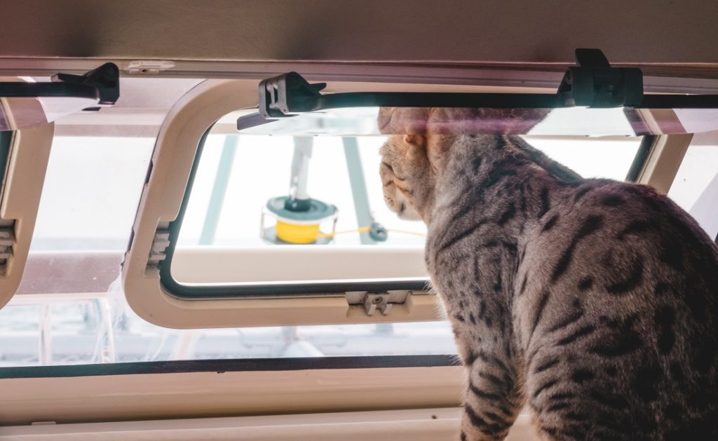 two cats sailing around the world with their humans.