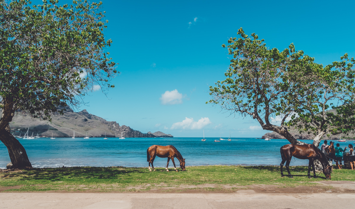 horses are a big part of culture in Nuku Hiva Marquesas