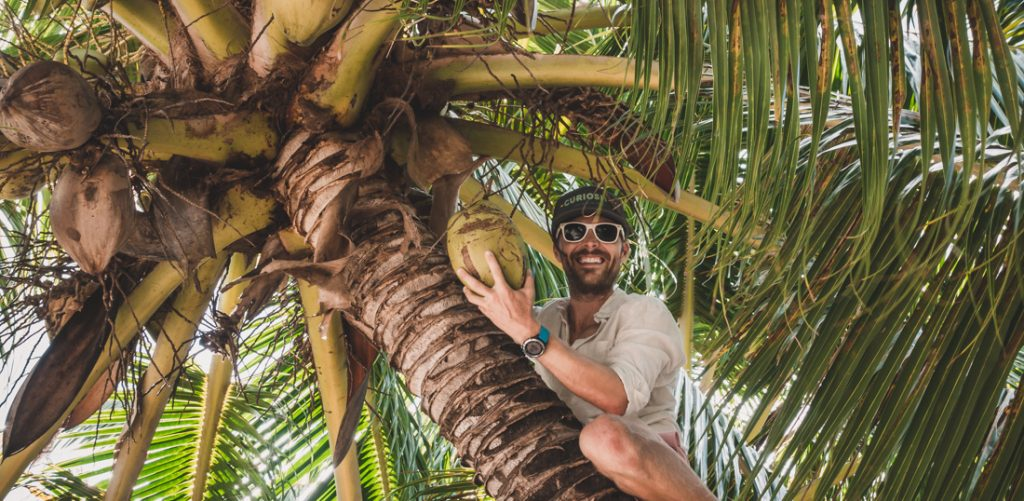 jason wynn climbing up coconut tree to pick coconuts
