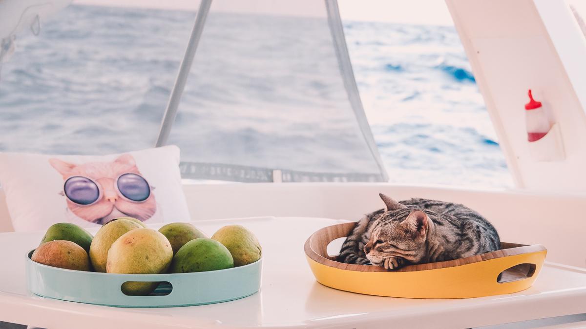 singa the sailing cat