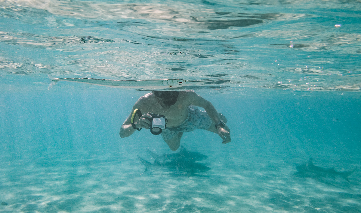 jason wynn swimming with sharks in moorea french polynesia