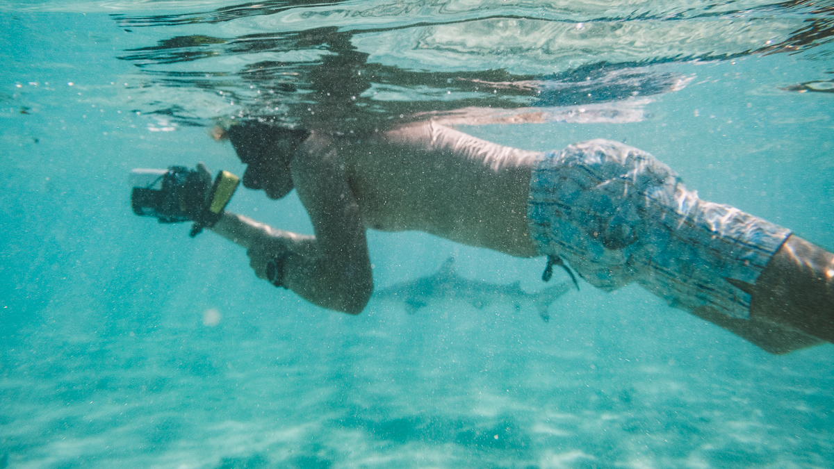 swimming with sharks in moorea, french Polynesia