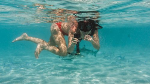 Nikki Wynn Swimming with sharks and rays in moorea