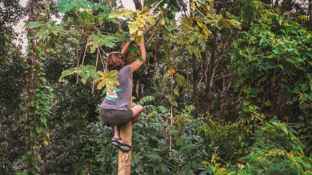 Mom goes wild in the jungle climbing up a papaya tree