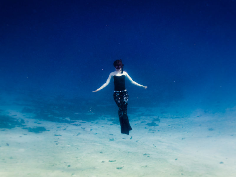 feediving and a sense of wonder in the sea