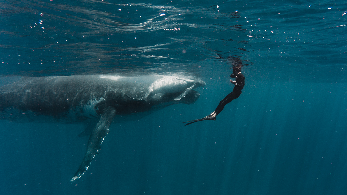 swimming with whales most incredible experience