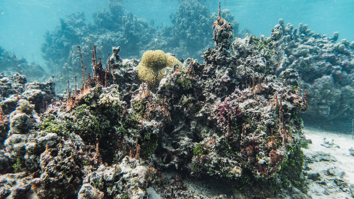 a sad dead coral garden in french polynesia