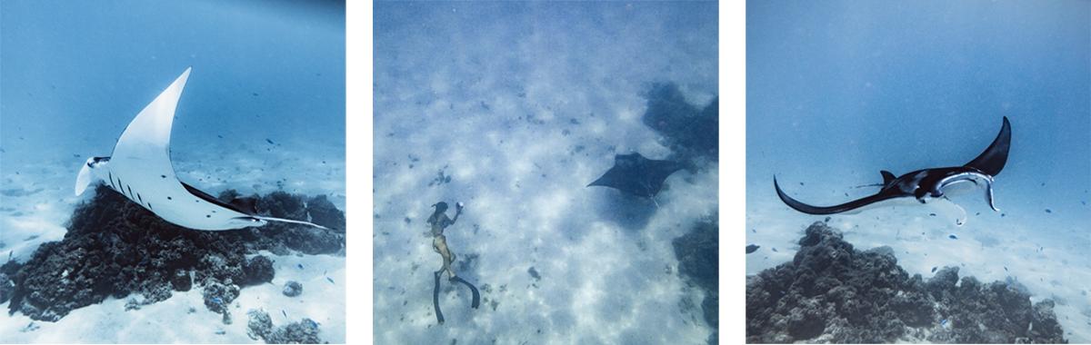 swimming with manta rays bora bora