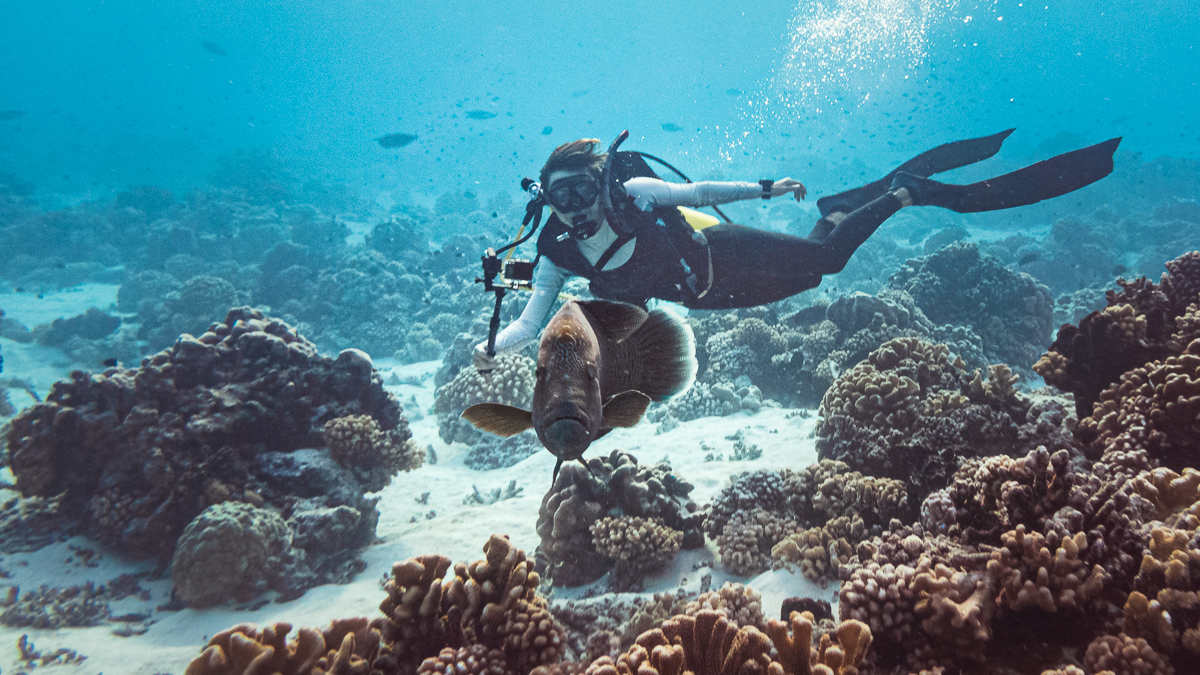 Nikki Wynn Diving in fakarava with Neapolian wrasse from Sailboat Curiosity