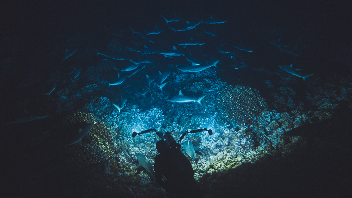night diving in fakarava south pacific with hundreds of sharks