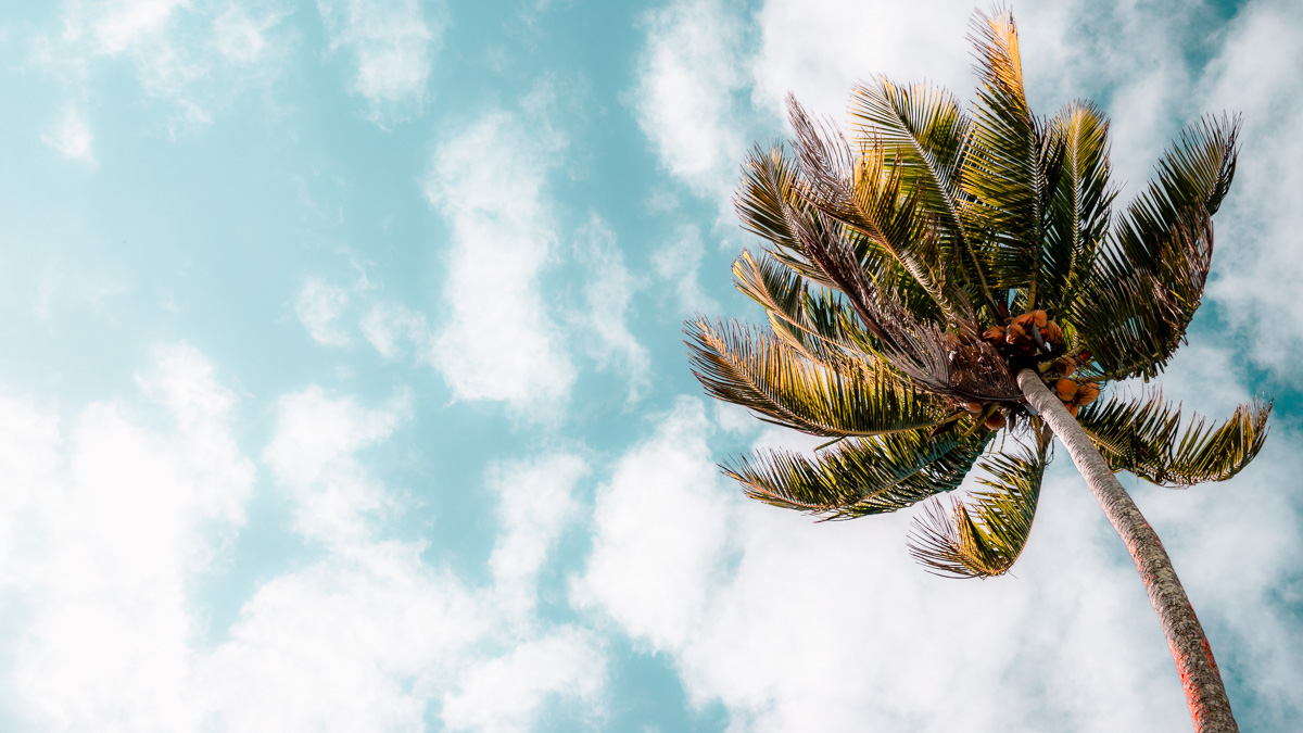 palm tree swaying against a blue sky
