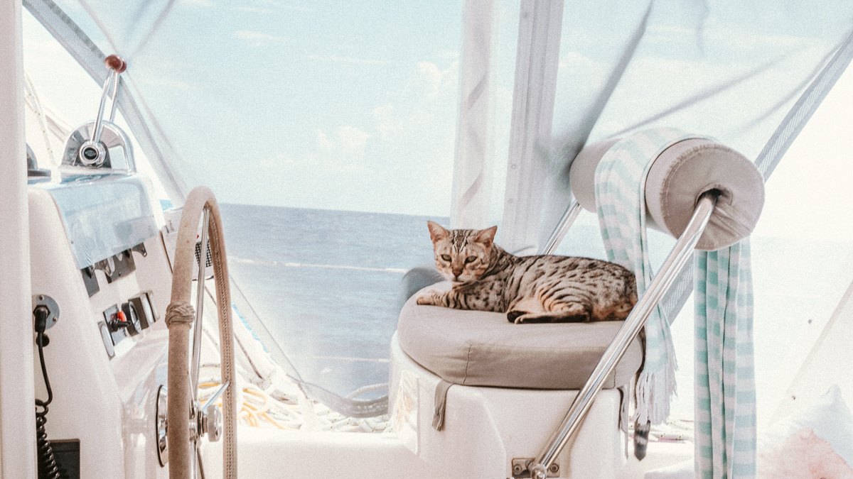 wynns adventure cat sailing the south pacific