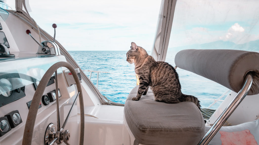 cleo the adventure cat sailing around the world